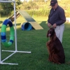 Connor on the agility field