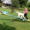 Agility - Teeter - totter