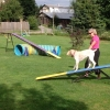 Agility Teeter - totter 2