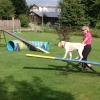 Agility Teeter - totter 3